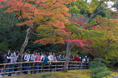 KYOTO, JAPAN - NOVEMBER 8,2015  Tourist crowed at Kinkaku-ji Temple looking and capturing at the Golden Pavillian with their camer Royalty Free Stock Photography