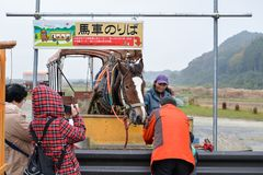 Carriage horse, Kyoto, Japan Royalty Free Stock Photos