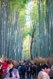 Kyoto, Japan - November 16, 2017 :The tourists are walking path. Through the bamboo forest at Arashiyama, Kyoto, Japan Stock Images