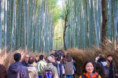 Kyoto, Japan - November 16, 2017 :The tourists are walking path. Through the bamboo forest at Arashiyama, Kyoto, Japan Royalty Free Stock Photos