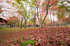 KYOTO, JAPAN - 28. NOVEMBER 2015: Viele Touristen besuchen das Tofukuji Lizenzfreie Stockfotos