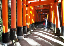 KYOTO, JAPAN - OCT 23 2012: A man takes photos of torii gates at. Fushimi Inari Shrine in Kyoto on october23 2012. The shrine is famous for its torii gates Royalty Free Stock Photos