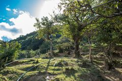 Arashiyama Monkey Park in Kyoto, Japan