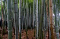 Famous bamboo grove at Arashiyama, Kyoto Stock Photography