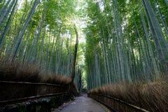 Famous bamboo grove at Arashiyama, Kyoto Royalty Free Stock Photography