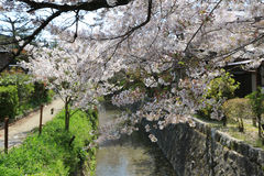 Kyoto, Japan at Philosopher& x27;s Walk in the Springtime. Stock Photography