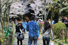 Kyoto, Japan at Philosopher's Walk in the Springtime. Stock Images