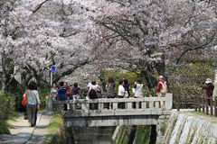 Kyoto, Japan at Philosopher's Walk in the Springtime. Stock Image