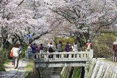 Kyoto, Japan at Philosopher's Walk in the Springtime. Royalty Free Stock Image