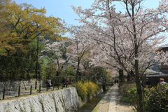 Kyoto, Japan at Philosopher& x27;s Walk in the Springtime. Stock Images