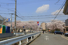 Kyoto, Japan at Philosopher's Walk in the Springtime. Stock Photo