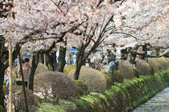 Kyoto, Japan at Philosopher's Way in the Springtime. Royalty Free Stock Images