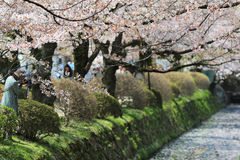 Kyoto, Japan at Philosopher's Way in the Springtime. Stock Image