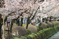 Kyoto, Japan at Philosopher's Way in the Springtime. Stock Photos