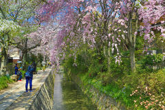 Kyoto, Japan at Philosopher& x27;s Walk in the Springtime. Stock Photo