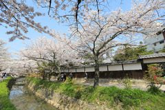 Kyoto, Japan at Philosopher& x27;s Walk in the Springtime. Royalty Free Stock Photography