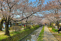 Kyoto, Japan at Philosopher& x27;s Walk in the Springtime. Royalty Free Stock Photo