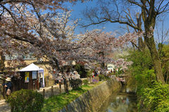 Kyoto, Japan at Philosopher& x27;s Walk in the Springtime. Royalty Free Stock Image