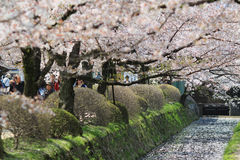 Kyoto, Japan at Philosopher& x27;s Way in the Springtime. Stock Photography