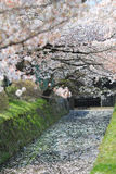 Kyoto, Japan at Philosopher& x27;s Way in the Springtime. Royalty Free Stock Photography
