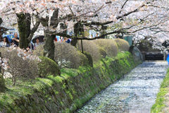 Kyoto, Japan at Philosopher& x27;s Way in the Springtime. Royalty Free Stock Images