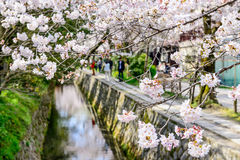 Kyoto, Japan in Spring. Kyoto, Japan at Philosopher's Walk in the Springtime Stock Photography
