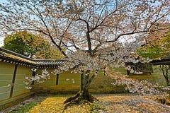 Kyoto, Japan springtime at Ryoanji Temple. The Kyoto, Japan springtime at Ryoanji Temple Stock Photos