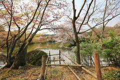 Kyoto, Japan springtime at Ryoanji Temple. The Kyoto, Japan springtime at Ryoanji Temple Royalty Free Stock Photos