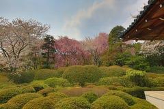 Kyoto, Japan springtime at Ryoanji Temple. The Kyoto, Japan springtime at Ryoanji Temple Stock Image
