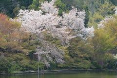 Kyoto, Japan springtime at Ryoanji Temple& x27;s pond. The Kyoto, Japan springtime at Ryoanji Temple& x27;s pond Stock Images