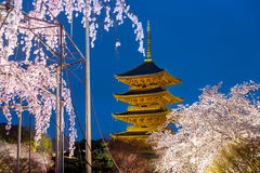Kyoto, Japan at Toji Pagoda with cherry blossomin ligh up in nig Stock Images
