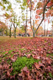 KYOTO, JAPON - 28 NOVEMBRE 2015 : Beaucoup de touristes visitent le Tofukuji Photo libre de droits