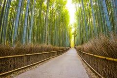Kyoto, Japonia bambusa las Obrazy Stock
