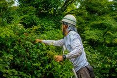 KYOTO JAPONIA, LIPIEC, - 05, 2017: Ciężki pracującego mężczyzna ogrodnictwo w Zen ogródzie Tenryu-ji, Nadziemska smok świątynia W Obrazy Royalty Free