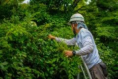 KYOTO JAPONIA, LIPIEC, - 05, 2017: Ciężki pracującego mężczyzna ogrodnictwo w Zen ogródzie Tenryu-ji, Nadziemska smok świątynia W Zdjęcie Royalty Free