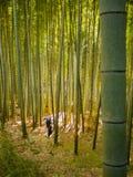 KYOTO JAPONIA, LIPIEC, - 05, 2017: Niezidentyfikowany mężczyzna odprowadzenie wśrodku pięknego bambusowego lasu przy Arashiyama,  Fotografia Stock