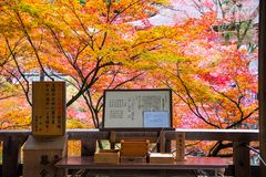Kyoto Japonia, LISTOPAD, - 25, 2016 - Japoński tradycyjny Pisze Obraz Stock