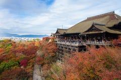 Kyoto Japonia, LISTOPAD, - 25, 2016 - piękna Momiji jesień c Zdjęcie Stock