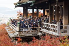 Kyoto Japonia, LISTOPAD, - 25, 2016 - piękna Momiji jesień c Obraz Royalty Free