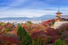 Kyoto Japonia, LISTOPAD, - 25, 2016 - piękna Momiji jesień c Obrazy Stock