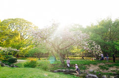 Kyoto Kamigyo garden. The picture take in kyoto on 1,May,2017. The family gathering in kamigyo garden Royalty Free Stock Photo