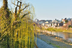 Kyoto Kamo river Kamogawa river view, Kyoto, Japan. Kyoto Kamo river Kamogawa river side view, Kyoto, Japan Royalty Free Stock Images