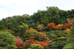 Kyoto landskap Royaltyfri Foto