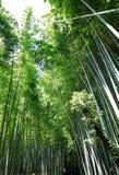 Kyoto lanshan, Japão imagem de stock royalty free