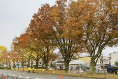 Big red and orange trees near Higashi Hongan-ji Royalty Free Stock Photos