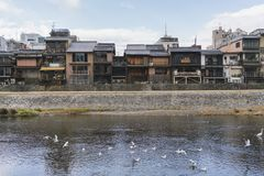 Kyoto Old City beside Kamogawa. Kyoto is a very old city in Japan Royalty Free Stock Photography