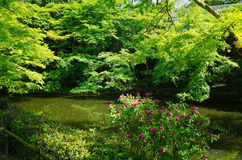 Kyoto Park. Take the photo in Kyoto on 1-May-2017 Royalty Free Stock Photos