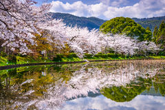 Kyoto in the Spring. Kyoto, Japan at arashiyama district in spring Royalty Free Stock Photography