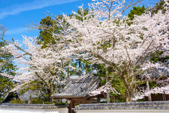 Kyoto in Spring Stock Images