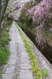 Kyoto spring Royalty Free Stock Photo